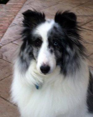 Sophie (Our Clown Dog)    April 28, 2002-April 14, 2015