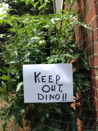 Dino's sign